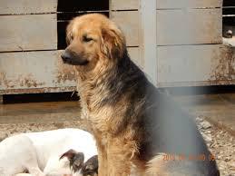 Tierheim Bad Salzuflen Hunde 44 Metanoia Tiernothilfe Hilfe Im Public Shelter Galati U2013 Andreas