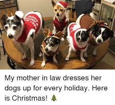 Christmas Dog Meme - my mother in law dresses her dogs up for every holiday here is