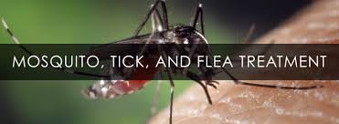 mosquito treatments cary organic lawncare cary weed control