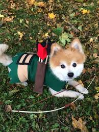 Halloween Costumes Dogs 25 Puppy Halloween Costumes Ideas Puppy