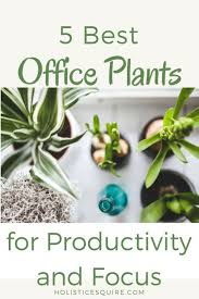 office plants increase productivity focus and health office