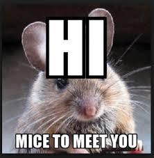 Mouse Memes - 20 mouse memes you ll find adorable sayingimages com