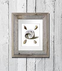 beach theme decor sea shell print no 17 sea shells living room