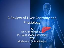 Human Anatomy And Physiology Review A Review Of Liver Anatomy And Physiology For Anesthesiologists