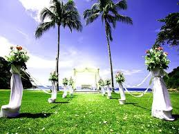 wedding backdrop to buy buy discount kate grassland wedding backdrop coconut tree white