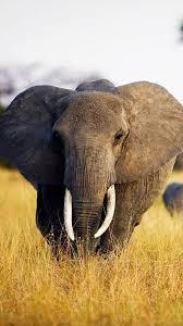 download wallpaper 1080x1920 elephant baby elephant love africa