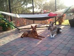 welcome to big paw pet care pet sitter dog trainer