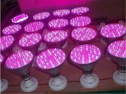 red and blue led grow lights 12w red blue led plant l hydroponic grow light bulbs for garden