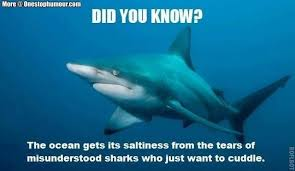 Funny Shark Memes - shark week 2017 a collection of the funniest memes