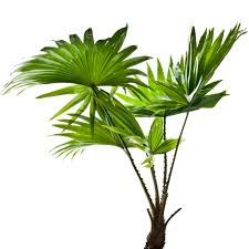 thoughtful reasons to give a tropical plant as a christmas gift