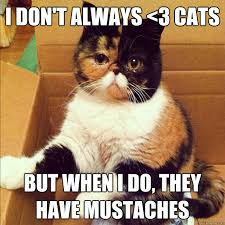 Mustache Cat Meme - i don t always 3 cats but when i do they have mustaches mustache
