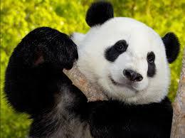 san diego zoo animals u0026 plants