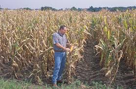 irrigated corn climate and agriculture in the southeast irrigated corn does less