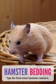 Best Bedding For Rats Hamster Bedding What Every Pet Owner Should Know Pbs Pet Travel