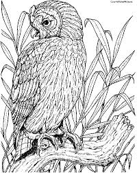 199 best owl colouring pages images on pinterest coloring books