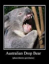 Koala Bear Meme - koala coby and michael dahlem photos of australian animals