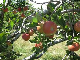Apple Orchard Collection Home Interiors Celebrate Mabon With Kids