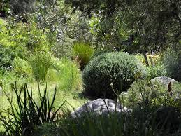 australian native plants landscape design melbourne sandra mcmahon gardenscape design