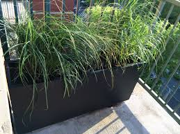 an patio prairie of ornamental grasses improvised