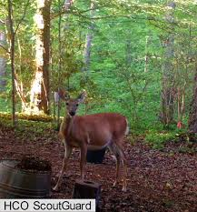 from bluebirds to turtles may backyard deer visits