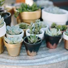 cute succulent pots quickly paint terra cotta pots in cute colors a hankering to be