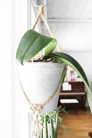 top five hanging plant pots home design and interior