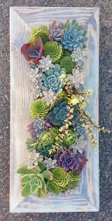 best 25 succulents ideas on pinterest succulents garden