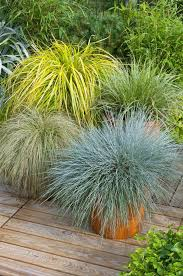 gorgeous grass pack of 10 amazing ornamental grasses colourful