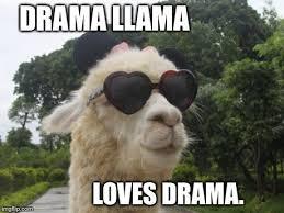 Llama Meme - 21 funny llama memes if you don t need no drama