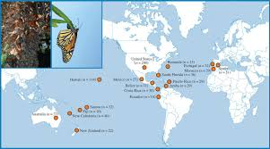 Monarch Migration Map Serial Founder Effects And Genetic Differentiation During