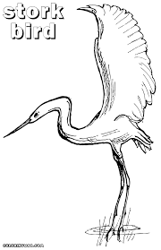 bird coloring pages coloring pages download print