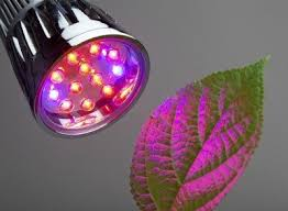 green light bulb meaning red light or blue light for plants effects of red and blue light