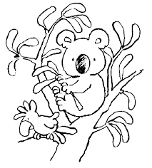 impressive koala bear coloring pages cool idea 6488 unknown