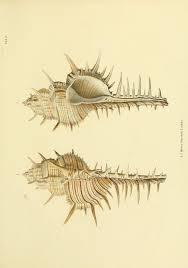209 best biological illustration images on pinterest science