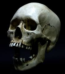5 facts about the human skull and 5 high res images