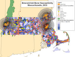 emerald ash borer map emerald ash borer works city of cambridge massachusetts