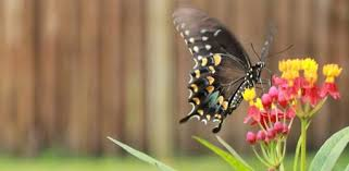 with the wings of a butterfly agape europe