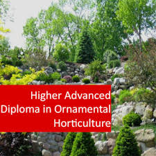 higher advanced diploma in ornamental horticulture vht009 orn