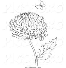 printable chrysanthemums flower with butterfly to coloring page