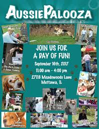 australian shepherd joliet aussiepalooza 2017 australian shepherd rescue event mettawa illinois