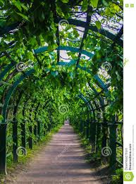 green archway in the park at summer plants tunnel pergola with
