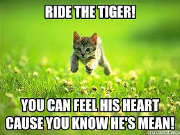 Tiger Meme - the tiger