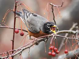 for the birds how to attract wildlife in winter hgtv