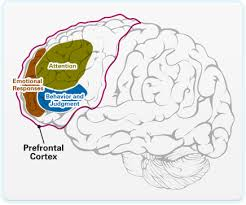 What Portion Of The Brain Controls Respiration 6 Ways To Improve Your Willpower Buffer Blog