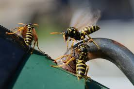 Best Way To Get Rid Of Mosquitoes In Your Backyard How To Get Rid Of Wasps Naturally Mnn Mother Nature Network