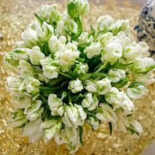 Jasmine Flowers Jasmine Flower Manufacturers U0026 Suppliers In India