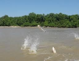 Water Challenge Asian Michigan Launches Invasive Carp Challenge To Keep Invasive Fish