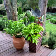 Garden Containers Ideas - garden ideas with pots and stones archives catsandflorals com