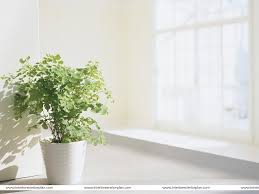 Beautiful House Plants by Interior House Plants Nuestroeje Com U2013 Beautiful Gardening Ideas