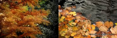 autumn color u2013 2 yoshizen u0027s blog
